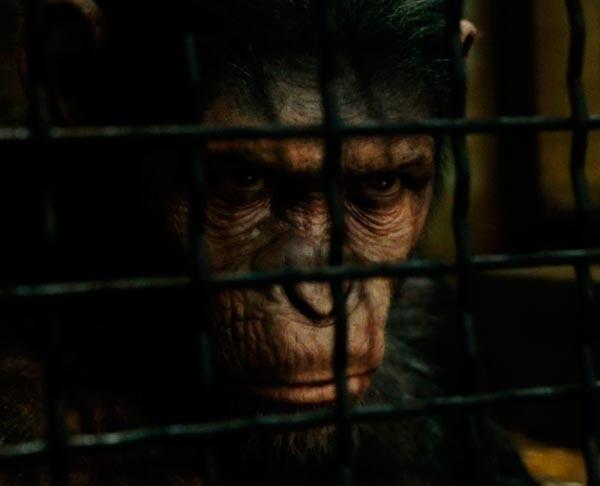 O Senhor dos Macacos - ou Quando um psicopata assume o laboratório   Conto Literatura conto ideologia religião Figura do Slideshow #3