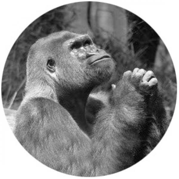 O Senhor dos Macacos - ou Quando um psicopata assume o laboratório   Conto Literatura conto ideologia religião Figura do Slideshow #4
