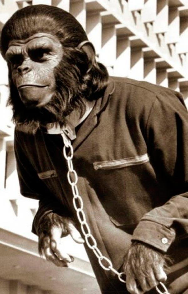 O Senhor dos Macacos - ou Quando um psicopata assume o laboratório   Conto Literatura conto ideologia religião Figura do Slideshow #6