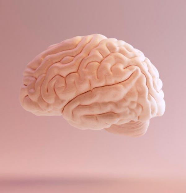 Transgêneros: Cérebro vs. Corpo - O que a Ciência tem a dizer sobre o Gênero? Psicologia & Comportamento psicologia comportamento ciências ideologia sexualidade gênero Figura do Slideshow #1