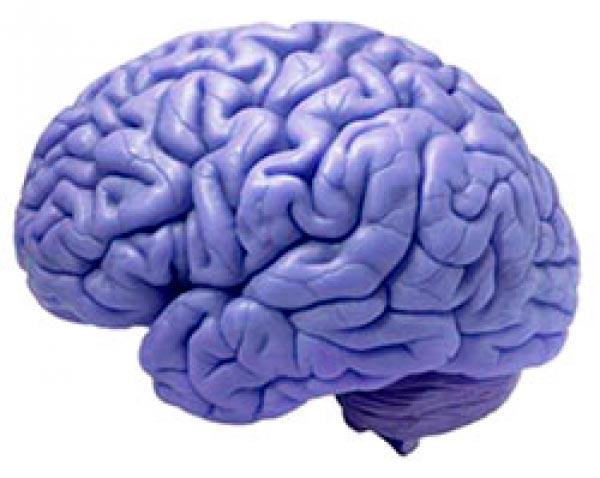 cerebro Figura do Slideshow #7